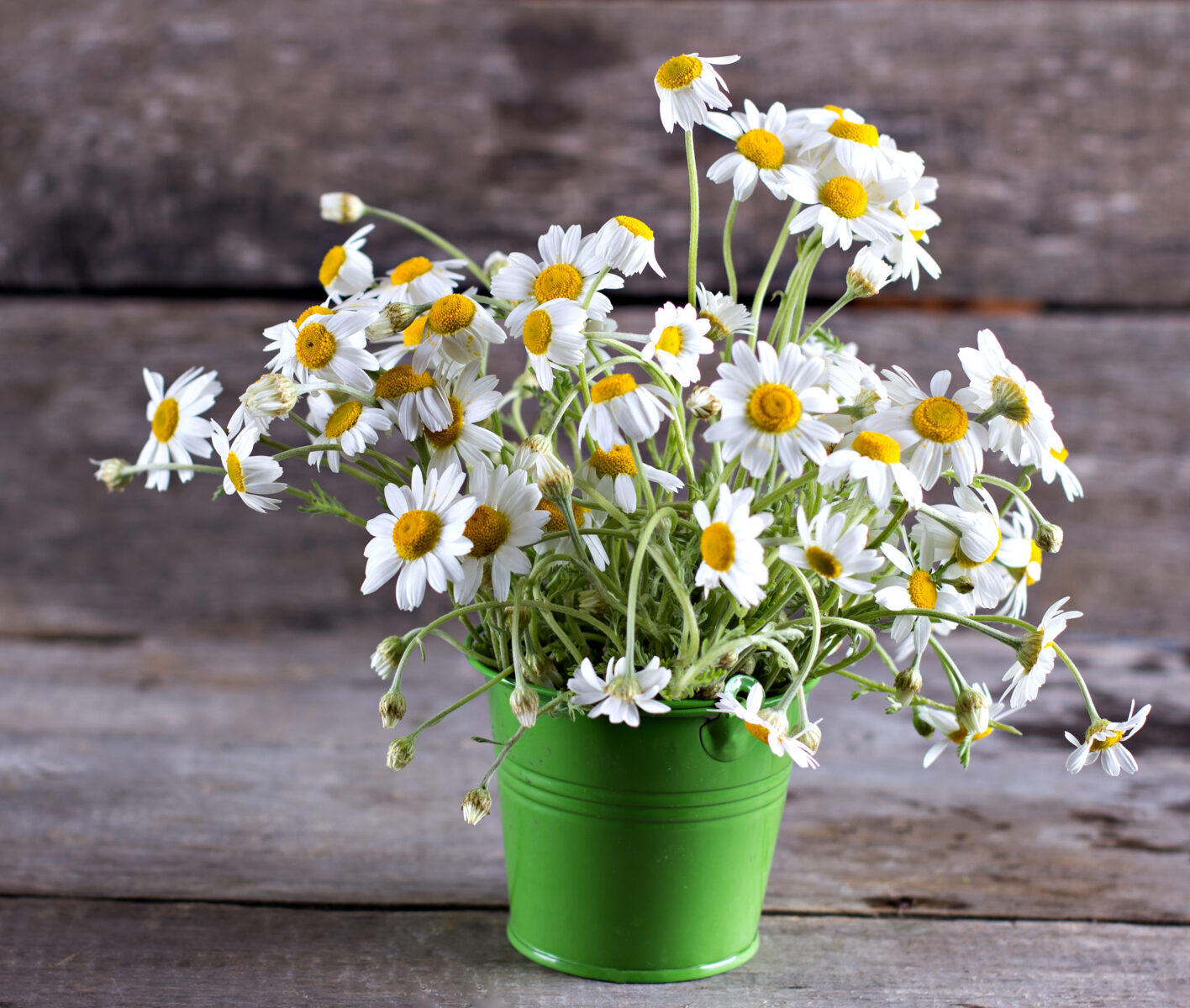 The Flowry - Sustainable flowers - flower shops - shop local - local flowers - slow flowers - farm to vase