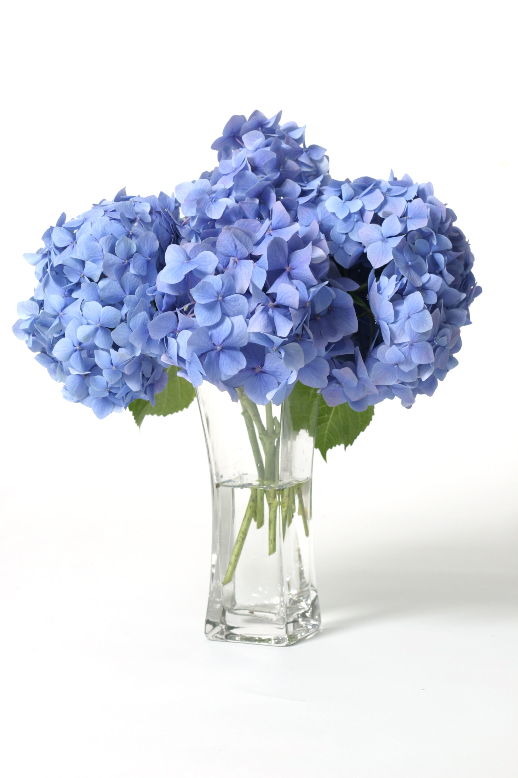 Sustainable flowers - Local flowers - flower shops - flowers for events - shop local - slow flowers - The bloomlist