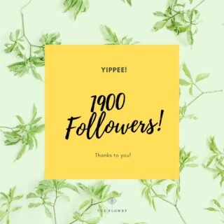 Yippee to 1900! 👏 👏 👏   We have a long way to go, but In the interest of starting somewhere...   W E  B E L I E V E... Flowers bring people together. They are apolitical & universally joyful. 😊   But like every commodity, the global business of flowers has veered far from nature's order. A once seasonal crop is now largely available year-round, with imports supplying more than 80% of the US market.  These imports come with consequences: A massive carbon footprint, grown with toxic pesticides & harvested by workers marginally compensated. Furthermore, the widespread use of floral foam, a non-recyclable micro-plastic, is a menace to both people & the planet. Altogether an unsustainable model! 🌍   We believe if flower lovers understood where & how their flowers are grown, like food, they would make different choices. 🤔   O U R  M I S S I O N  I S ... to restore consumers' connection to seasonality & provenance in flowers—in the interest of the environment, economics & basic human rights. Plus, a fresher, more fragrant, longer lasting bloom.  We want to advance a growing community of progressive florists prioritizing locally & American grown flowers, in season, & sustainable design practices.   We believe vetted imports may fill gaps where American product is in short supply.   So, where to start?  🌼 Let's start considering the health implications of the flowers we buy the same way we read #food labels.  🌼 Let's look for #certifiedamericangrown @americangrownflowers &/or @slowflowerssociety labels on websites, inside shops & on the flowers themselves. 🌼 Let's avoid chemically dyed & dried flowers that contribute to carbon emissions, can't be composted & pollute groundwater.  🌼 Let's demand FOAM FREE design. ✊  Asking questions is about being informed. It's about making educated decisions that serve your own value system. It's about starting somewhere.   The Bloomlist (link in bio) 👆 connects flower lovers with eco-conscious florists prioritizing American grown, seasonal