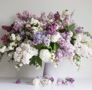 Lotsa love out there for the confidence-boosting lilac, best known for their heady, signature scent, and memories of grandma. 🥰 ⁠⁠ ⁠⁠ Early harbingers of spring, lilacs bloom for only a short time, but have a hardy, perennial nature, living for about 100 years. ⁠⁠ ⁠⁠ Here's a few sprucing up our feed, scroll through our purple (symbolizing spirituality) picks of the week (right to left) 👉🏻: ⁠⁠ ⁠⁠ 💜 @flowerlanedesign (UTAH)⁠⁠ 💜 @bloomtuesday (San Francisco, CA) ⁠⁠ 💜 @littleacreflowers (Washington, DC) ⁠⁠ 💜 @acertainpointofview⁠⁠ 💜 @figandtwigs⁠⁠ ⁠⁠ Visit The Bloomlist at our link in bio to see where lilacs are blooming at shop near you. ⁠⁠ ⁠⁠ #onthebloomlist #lilacs #americangrown #flowers #cutflowers #wildflowers #localflowers #seasonalflowers #springflowers #bouquetofflowers  #flowersofinstagram #loveflowers #bouquetofblooms #bouquet #instabouq #floraldesign  #floralstories #floralfix #floralchic #floralphile #stilllife #shoplocal #prettythings #thingsilove #bloombeam #theflowry ⁠⁠