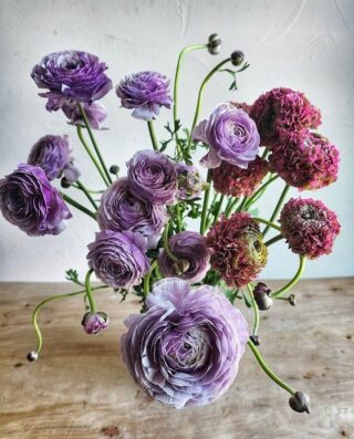 These lavender runcs by @labellumflowers are just seriously, wow. 💜  That's all we got.   Happy Monday, #floweristas. ☀️ Bloom on. ✌️   FOLLOW @theflowry for best in bloomcraft for people, spaces and occasions.   #onthebloomlist  #labellumflowers  #montanaflorist #americangrownflowers #springflowers #flowersinseason #seasonalstems #whatsbloomingnow #ranunculus #floweringeveryday #flowersforeveryoccasion #flowerdelivery #loveflowers #floralfix #underthefloralspell #gardentovase #farmtotable  #bloombeam #theflowry 