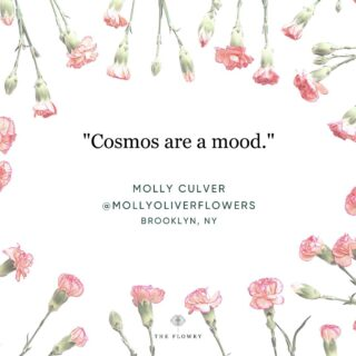 """This quote by Brooklyn-based farmer-florist, environmental crusader and social justice activist Molly Culver @mollyoliverflowers sticks with us.   Our interpretation is this: The spirit of the #Cosmoflower is the spirit of seasonality, diversity and connection to Mother Nature herself. Whether you fancy yourself a #consciousconsumer or simply love these blooms, the reality is: Cosmos are only available to us because someone nearby, a local farmer, grew them. Lithe and delicate, Cosmos would never survive a journey overseas, unlike 80% of the flowers available in the USA, which is also why you rarely if ever see them in a supermarket or bodega. (Hint: Because the majority of #grocery flowers are imports unless they are specifically labeled #locallygrown or certified American grown @americangrownflowers.)   The bottom line: If we relied solely on flower imports, we'd never know what we were missing - which is right in front of our noses, so to speak. Like cosmos. And our reliance on imports handcuffs us to a global trade that won't serve us, the environment or economy, in the end.  """"Supporting local is about building a more resilient future,"""" says Molly.  And supporting local is about ensuring Cosmos, and other seasonal floral delicacies, that are available to us for but a blip, show up year after year.  Check out @mollyoliverflowers, their #seasonalflowerproject, and other #NewYorkflorists on The Bloomlist (link in bio) 👆 for your next floral giving occasions. @theflowry connects flower lovers to seasonal floristry and sustainable design.   #whatsbloomingnow #flowersinseason #cosmos #seasonalfloristry #sustainabledesign #onthebloomlist #nycflorist #cleanflowers #americangrown #flowers #cutflowers #wildflowers #localflowers #seasonalflowers #weddingflowers #flowersofinstagram #loveflowers #floralstories #floralfix #shoplocal #bethechange #stopclimatechange #nofloralfoam #theflowry"""