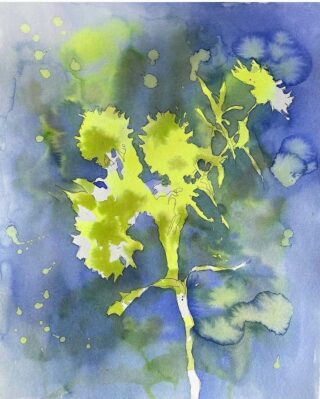 Botanical Series 7.  #ICYMI and/or are new to our feed (welcome!), we are obsessed with this watercolor Botanicals series by @rhoobysue Barb Oblinger in Charlottesville, VA.   This collection of seven works is inspired by the blooms in her garden. We are excited to offer any three pieces EXCLUSIVELY as a TRIO. Or, if you're interested in purchasing an original separately, DM us for details.  Hang solo to splash up a space, or lovely as a triptych. Each original work is watercolor ink on paper, 11 X 14 print matted to 16 X 20, from left to right 👈  1. Asters and Marigolds.  2. Geraniums.  3. Zinnias 3. 4. Asters. 5. Zinnias 4. 6. Zinnias. 7.  Asters 2.  The Flowry connects flower lovers with eco-conscious florists prioritizing American grown, seasonal flowers & sustainable design practices. Plus, a curated marketplace of floral fashion, home decor, art, gifts and more.   Visit our website (link in bio) 👆 for your next floral gifting occasion.  #artwork #botanicalart #watercolors #inspiredbyflowers #illustration #drawing #painting #design #artloversart #artforsale #art #artwork #artful #originalart #contemporaryart #modernart #artforyourhome #artoftheday #instaart #artofinstagram #positivity #thingsilove #loveflowers #flowerista #bloomdoodles #bloombeam #ladieswhodesign #theflowry